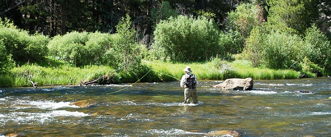 Taylor River Fly-Fishing